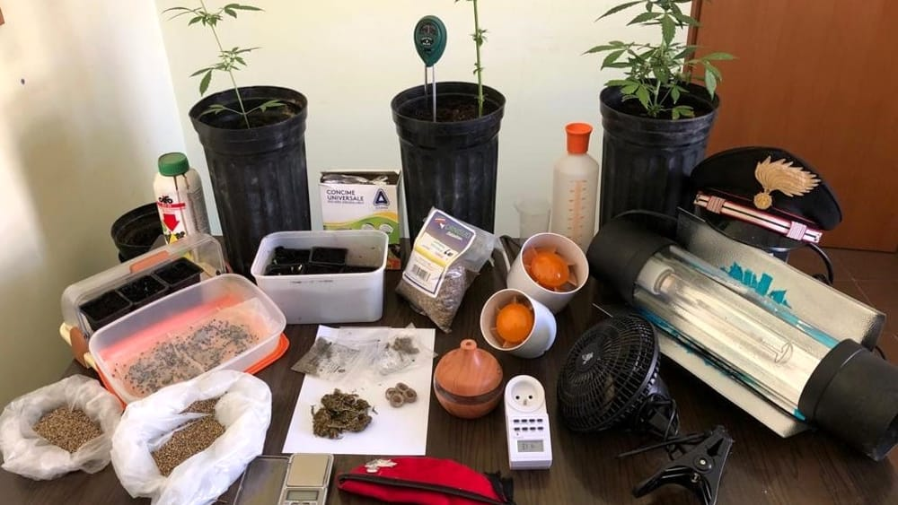 Coltiva cannabis e ruba energia elettrica: arrestato